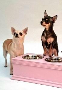 Chihuahua Food